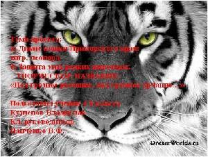 Дикие кошки приморского края тигр